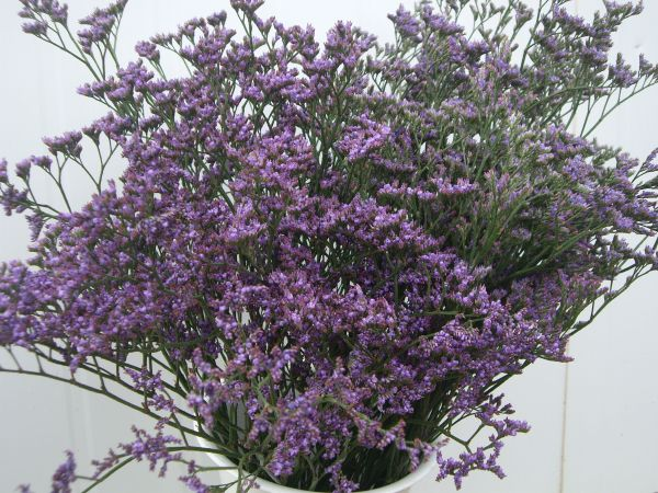Caspia Importada por Flores Musacco