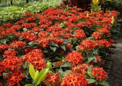 Plantas de gran calidad importadas por Flores Musacco