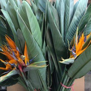 flor de Pajarito